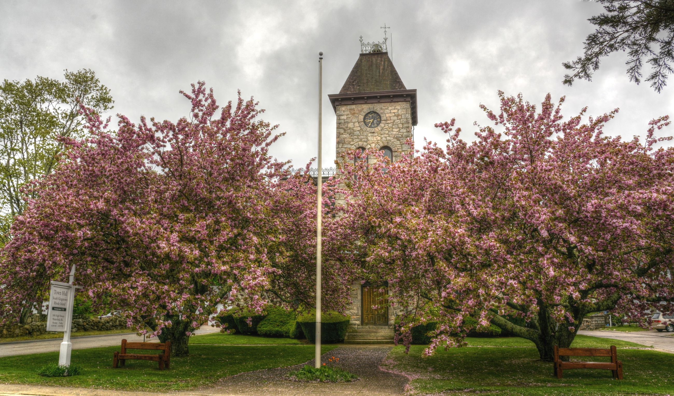 Town Hall cherry blossoms - photo credit Victoria Dority